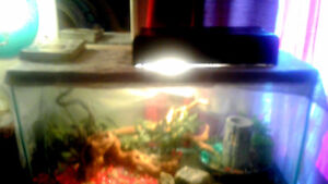 3.5÷2feet high frog aquarium with two fire belly toads