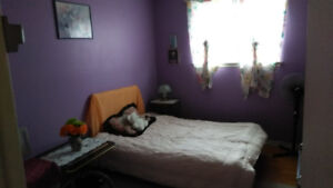 Room for rent -shared accommodation in a quiet/tidy house.