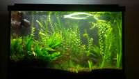 29 gallon aquarium with fish, plants, and all accessories