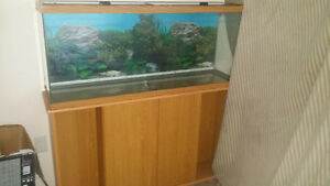 40 galon fish tank