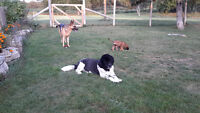 ****Prancing Paws Dog Sitting - IN OUR COUNTRY HOME