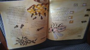 The Beeman Book learn about how to bees work in the hive Cambridge Kitchener Area image 2