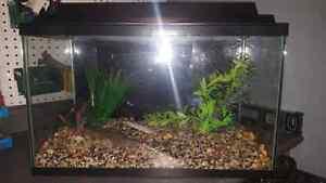 10g Aquarium