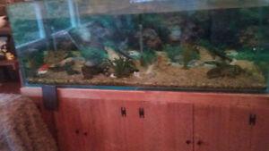very large aquarium