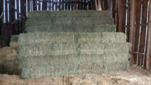 Very good quality small square & round hay bales