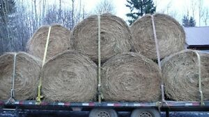 Hay for sale Williams Lake Cariboo Area image 2