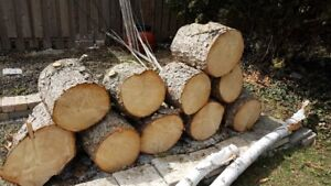Pine Logs (~ 38 cms in diameter/15 inches)