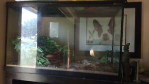 Large reptile tank with sand and habitat water dish and more