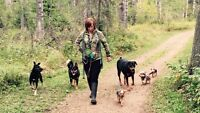 Dog Walking and Other services