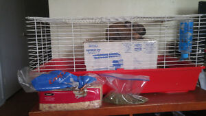 Small Rabbit and Large Cage