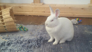 Bonded Bunnies for Sale with EVERYTHING