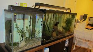 kit de 4 aquariums vendu seulement ensemble Saguenay Saguenay-Lac-Saint-Jean image 2