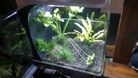 Nano aquarium 20l