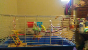 Two baby budgies looking for a new home. Male and female.