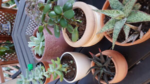 HUGE Garage Sale and PLANT Sale - 61 Grover Drive-16 June 8:00am