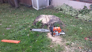 Stump grinding and removals. Peterborough Peterborough Area image 3