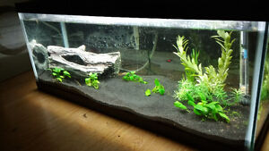 20 gallon fish tank with green spotted puffer