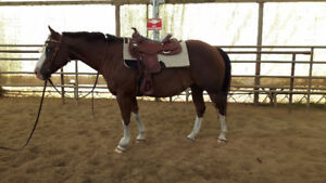 Flashy Registered Quarter Horse