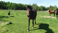 pouliche (cheval)
