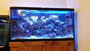 90 Gallons Saltwaters Aquarium with Fishes and Corals