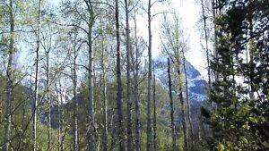 Beautifully treed lot in New Hazelton, BC