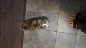 1 cat 1 kitty need rehoming