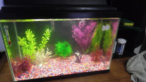 30 Gallon Tank with everything you need! INCLUDES FISH!