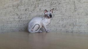 Beautiful sphynx hairless kitten for sale