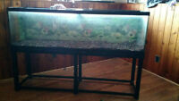 125 Gallon Tank And Stand With Fluval Fx 5 Pump Need Gone Asap