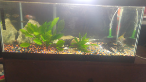 Fish for rehomeing