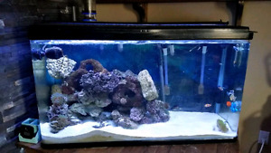 Looking to trade my salt water tank open to offers
