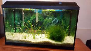 Aquarium tout equipé