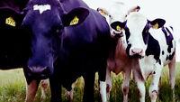 Dairy Farm Labourer