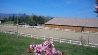 Horse Boarding - With Indoor Arena!!