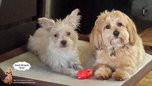 **Small Breed Doggy Playdates & Sleepovers small dogs (No Cages)