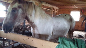 Therapy horse to rehomed by December