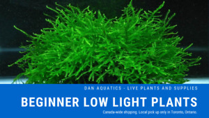 Java Moss, Java Fern, Marimo Moss Ball, Jungle Val & More!