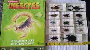 Collection d insectes