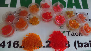 LIVE BAIT! Salmon Roe Bags! Toronto Outdoor Store