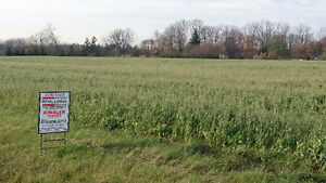Beautiful country property, large barn and 2 bedroom house London Ontario image 1