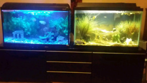 Two complete tanks and stand