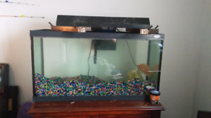 30 gallon tank with devilfish ,rocks and filter