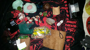 Complete set up for hermit crabs Windsor Region Ontario image 3