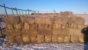 $5 per bale - 300 Small Square 2015 Tame Hay Bales For Sale