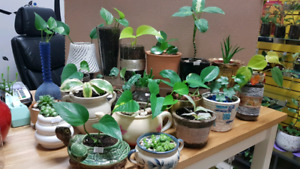 $10 each teacher's gift air purifying plants in ceramic pots