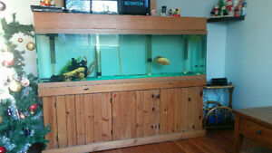Saltwater or fresh water tank with fish ! Kingston Kingston Area image 2