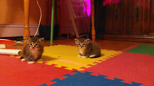 Free Kittens to Good Home - They Found Their New Owner