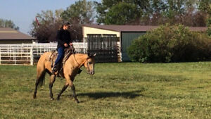 7 yr old QH mare, negotiable on price. Will consider trades!