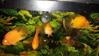 hi have fish tank and lots of fish