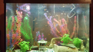 Beautiful 65 Gallon aquarium with all accessories and fish